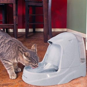 Best Cat Water Fountain