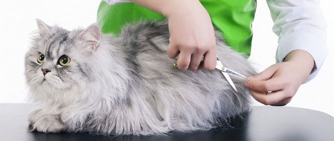 Cat Grooming Tips