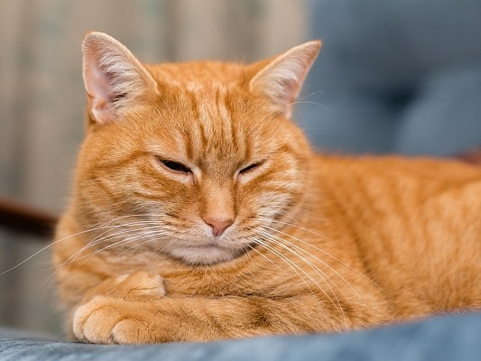 Cat sedation