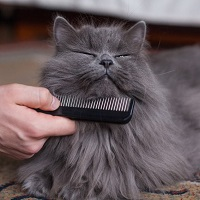 Combing cat hairs