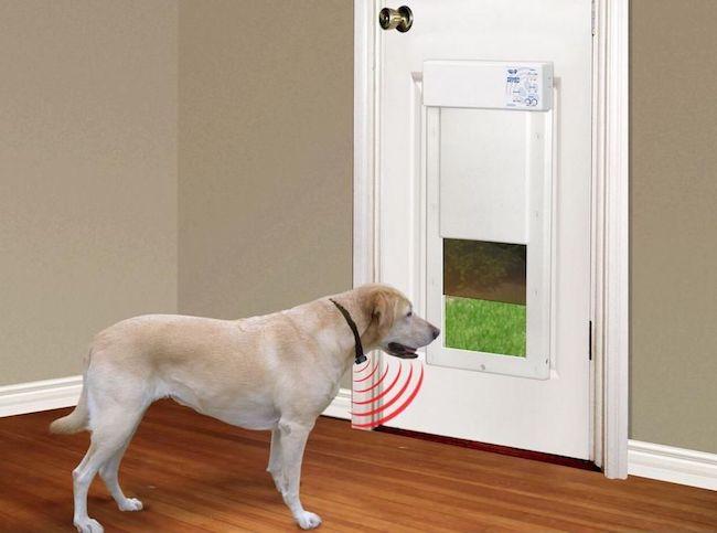 Stop Cat From Using Dog Door