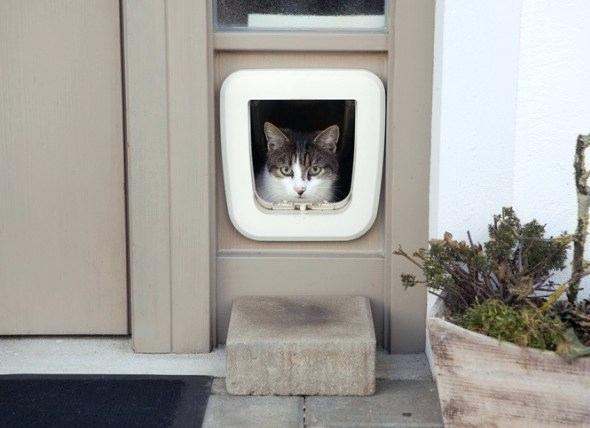 Prop open a cat door