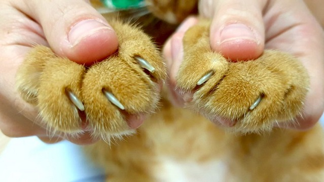 how to trim cat claws
