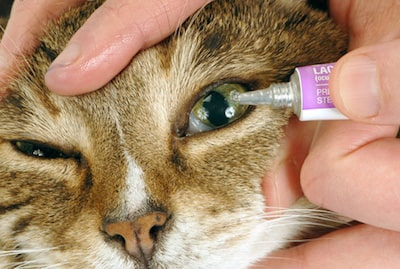 Cat Eye Drops