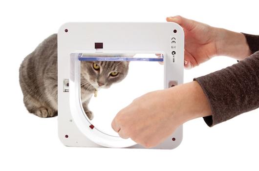 train cat to use cat door