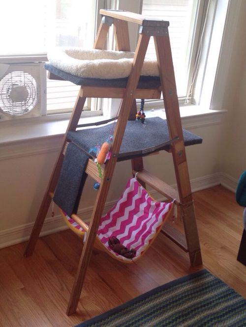 Kitty Ladder DIY Plan