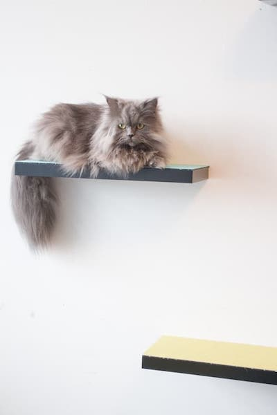 Simple Cat tree as Cat Shelves