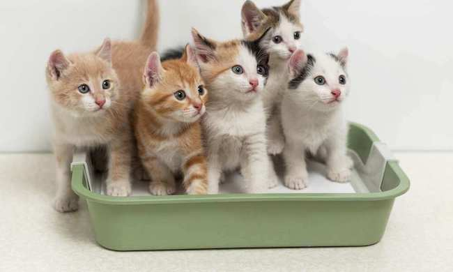 List of Automatic Litter Boxes