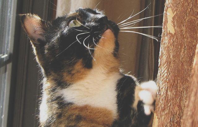 list of Cat Repellents