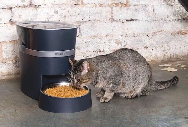 A list of Automatic Cat Feeders