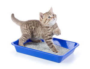 Use the right amount of litter for your cat in the litter box
