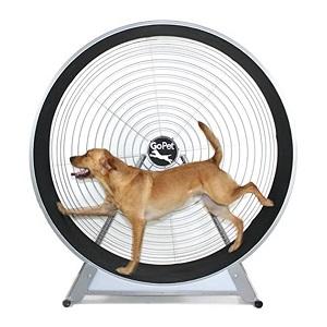 GoPet Treadwheel - Indoor Or Outdoor Exercise
