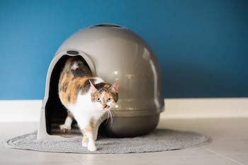 Cats prefer hooded litter boxes for privacy while shedding