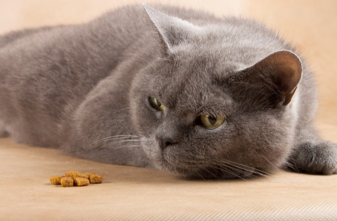 How Long Can a Cat Live Without Food