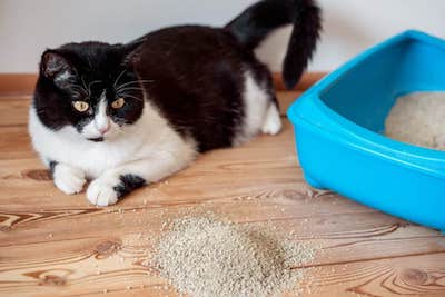 How can I stop my cat from getting litter everywhere?