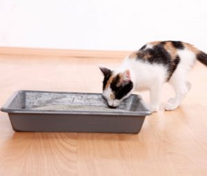 Introduce your cat to the litter box