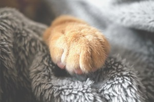 Keep paws clean to avoid litter from spreading