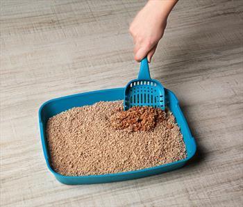 scooping cat litter
