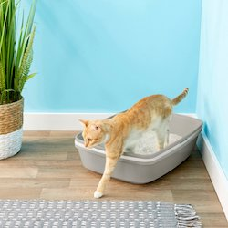 Location of your cat's litter box while training