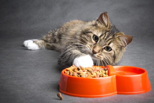 How Often should you wash cat bowls?