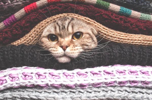 Safe Heated Cat Beds