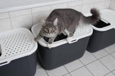 Cat Refusing Litter Box