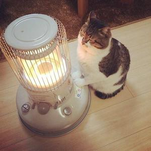 Heat Lamps are a great alternative to heating beds