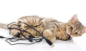 If your cat plays with wires, then electric beds are not safe for cats