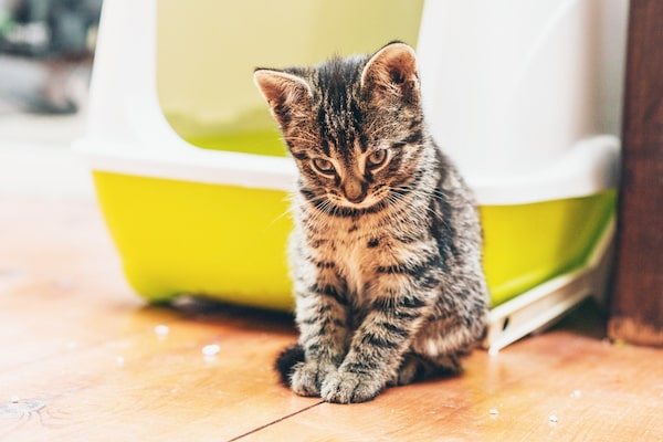 stop your cat peeing outside her litter box