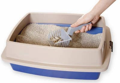 Scooping Waste from Litter Box