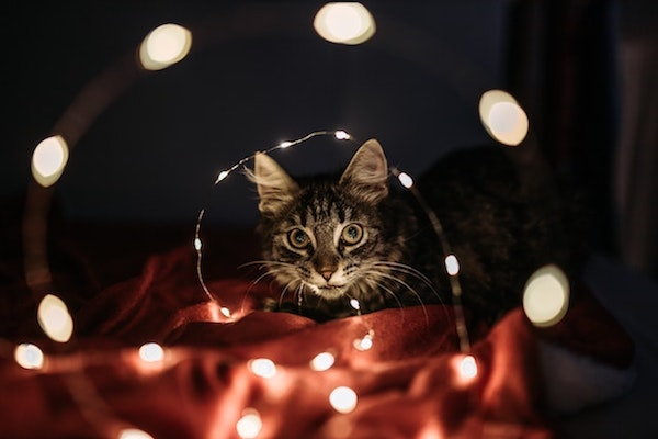 How to keep cats out of Christmas Tree