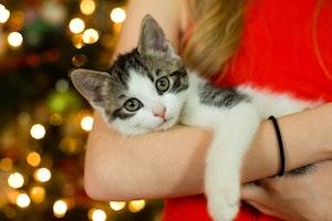 Cat with Cat Parent